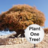 Plant_1_Tree