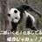 Panda (@Panda__TORA)