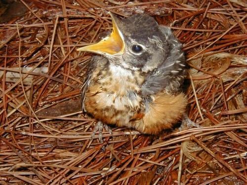 Image result for birdsnest