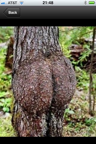 Tree Up Ass 121