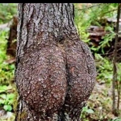 Paki nudist beach porn