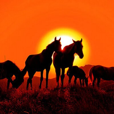 Horse Safaris | Social Profile