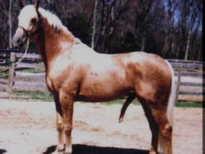 Dick horse Mr. Hands: