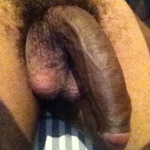 shemale babes with dicks having sex