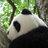 ブンブン-bunbun (@p_p_panda)