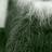 Formerly Gregs Beard