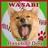 @wasabi_shiba