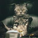 Bertrum Thumbcat