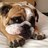 Bulldog Barkley Coccolone (@BulldogBarkley) Twitter profile photo