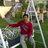 sandeep_chamoli