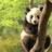 パンダさんの画像