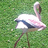 little_birdiee