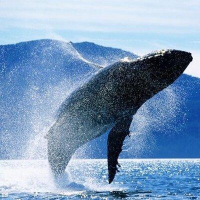 ballena azul - photo #40