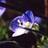 小花幸多のアイコン