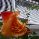 Rose Rhodes - @roserhodes34 - Twitter