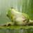 frog0753030