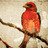 Jennifer Wasson - RedBirdCabin