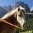 Cavallo Curioso®