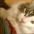 https://pbs.twimg.com/profile_images/2650119627/f7920095665e281d125bbf2ecfaa017a_normal.png