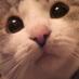 ナギ(✨猫と暮らす日々✨)のアイコン