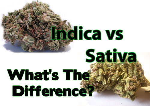 a comparison the effects of canabis sativa and canabis indica What is the difference between sativa and indica cannabis from cannabisnet on vimeo effects of cannabis: the effects of marijuana can vary greatly depending on sub-species and strain.