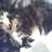 Pokkle and Nishi