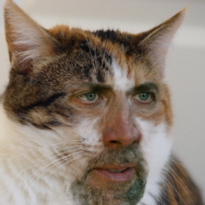 Retarded Cat Face