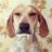 John T (@Creox) Twitter profile photo