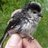 @Long_Tailed_Tit Profile picture