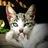 Rebeca Sanchez twitter profile