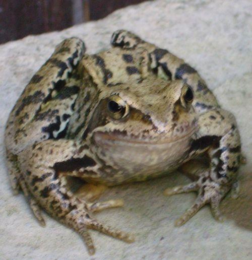 Trug Pond Frogs (@trugpondfrogs)