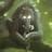 chupascz's avatar'