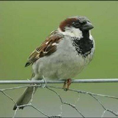 @sparrow1404