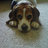 BeagleMurphy
