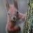 JoSquirrel42