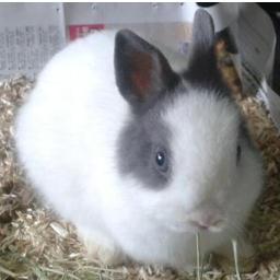 Bunny_Pinpin