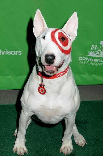 what dog is the target dog