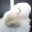 miho_hitsuji