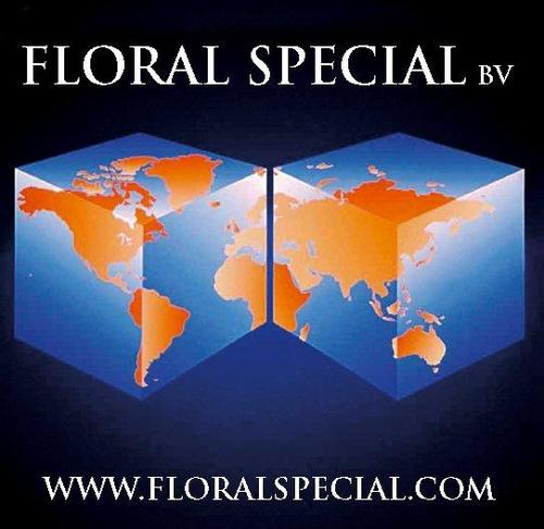Floral Special (@FloralSpecial) | Twitter