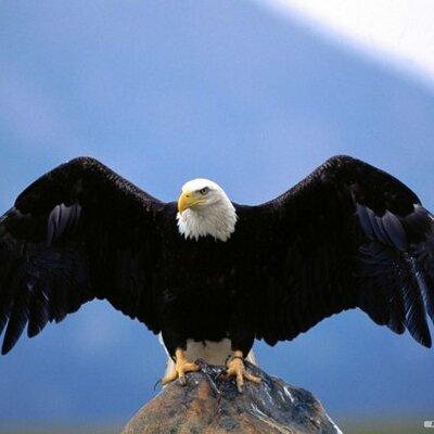 Eagle S Wings Food Pantry