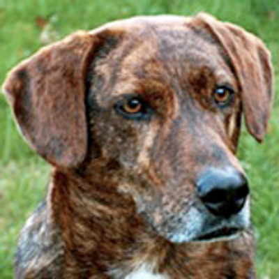 Mountain Cur Rescue (@CurRescue) | Twitter