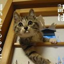 ニャンチューは猫である☻ (@0024maimi) Twitter