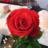 keiga_kizuna