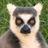 A_Reader_FT's avatar'