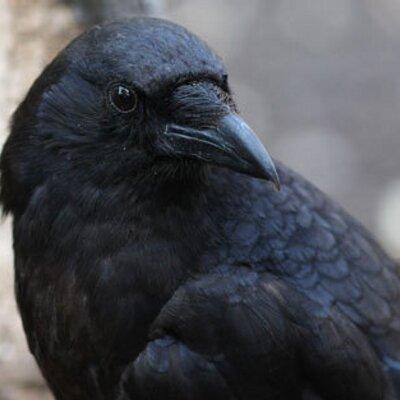 Ol Crow Tattoo At Olcrowtattoo Twitter