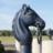 Image de profil de lifanlion