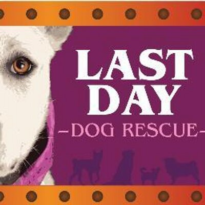 Last Day Dog Rescue Mi