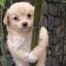 @madz_loves_dogs