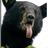 Cranston Bear
