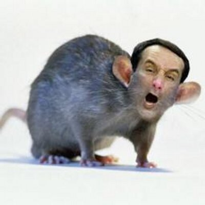 Image result for Coach K rat